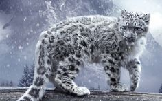 cool Animals cat feline snow leopards snow wood trees pine trees mountains plants