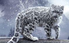 cool Animals cat feline snow leopards snow wood trees pine trees mountains plants