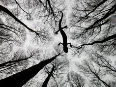 Still life - Edwin Giesbers