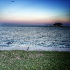 Yoga in Vinoy Park-Start your day with Yoga in the park looking at this beautiful view, chances are you will see a dolphin or two. Great way to start the day. Free classes Sat mornings. Other classes offered  offered different mornings through St. Pete yoga.