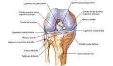 Joelho - Diartroses - Sistema Articular - Sistemas - Aula de Anatomia