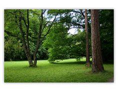 Betliar - Park 6 Golf Courses, Park, Plants, Parks, Plant, Planets