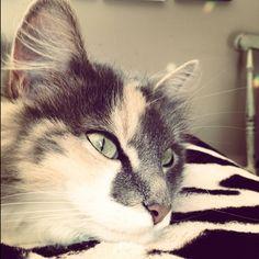 Kitten kitten kitten!