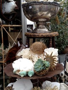 Love this display of succulents and seashells...............Brooke Giannetti