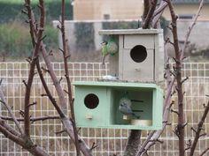 En janvier les oiseaux au jardin