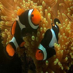 Curiosidades Animal: Peixes