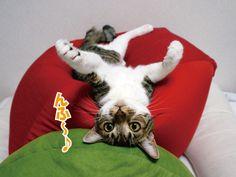 涼しい・・・のか??|うにオフィシャルブログ「うにの秘密基地」Powered by Ameba