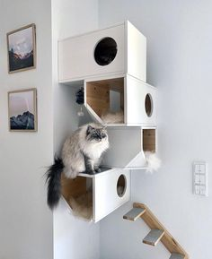 Your cat deserves a place of their own. This modern and unique cat tower provides a safe space for your cat with tons of room to explore and play. Animal Room, Space Cat, Cool Cat Beds, Diy Cat Tower, Cat Wall Furniture, Modern Cat Furniture, Cat Wall Shelves, Cat House Diy, Kitty House
