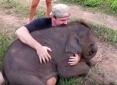 Voici quatre minutes formidables d'un éléphanteau qui rencontre l'amour de sa vie : un humain.