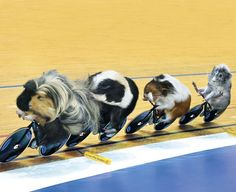 March: Track cycling