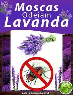 3 formas de repelir moscas usando Lavanda | Rural Marketing