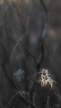 nature # 11 - Limited Edition of 1 Photograph Original Paintings, Original Art, Artwork Online, The Good Place, Saatchi Art, Dandelion, The Originals, Fall, Flowers