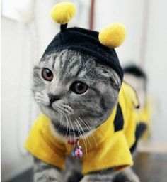 Free Shipping cat clothing