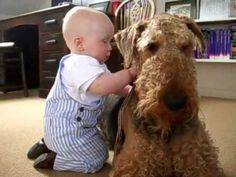 """""""Duckie""""  Ptolemy with Gertrude.  Beautiful Airedale.  Another YouTube video by BuddhaBoyClips"""