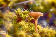 Photograph The Pixie Funnel Cap by Jivko Nakev on 500px