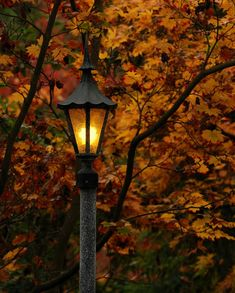 Lampost Photo, Light in the autumn woods, light in the dark, wall decor, home decor, cottage decor.  Photo starting at $9.95.  Perfect for that quiet moment.