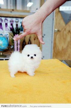 Fuzzball of adorableness!