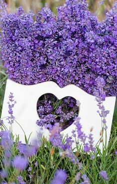 Purple flowers are a great way to add interest to your yard or landscape. See some of our favorite purple garden flowers! Purple Flower Names, Types Of Purple Flowers, Purple Love, All Things Purple, My Flower, Lavender Cottage, Lavender Blue, Lavender Fields, Lavender Flowers