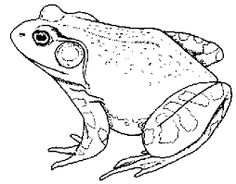toad coloring pages google search