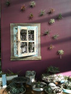 tillandsia+thigmotrope satellite fleet = vertical garden, purple wall