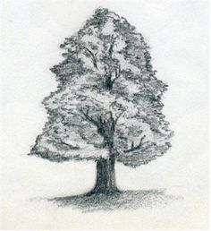 http://www.easy-drawings-and-sketches.com How To Draw A Tree - & more