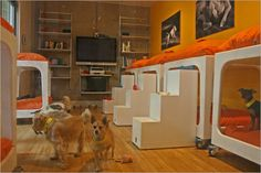 Love the modern lines. Perhaps in the cattery or in a holding/intake area. Luxury Dog Kennels, Dog Grooming Shop, Dog Daycare, Daycare Ideas, Pet Hotel, Cat Info, Pet Boarding, Dog Salon, Dog Rooms