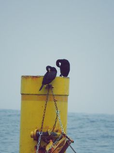 Kormorany Cormorants Wild Birds, Wordpress, Fotografia