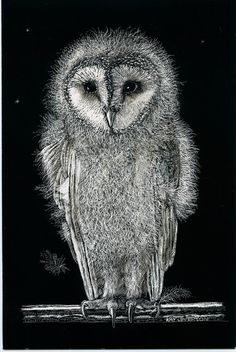 Barn Owl Baby Art Card from original Scraperboard  by Kay Leverton
