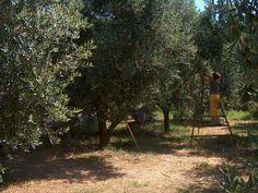 #lemon in #sorrento Sorrento, Outdoor Furniture, Outdoor Decor, Sidewalk, Lemon, Pizza, Park, Food, Walkway