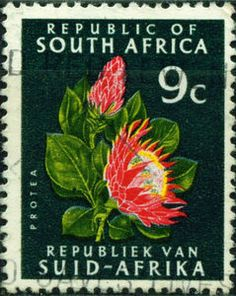 Protea cynaroides African Animals, African Safari, Protea Flower, Hindu Culture, Old Stamps, Flower Stamp, Small Art, African History, Stamp Collecting