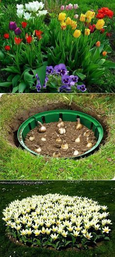 57 Fresh Spring Garden Ideas for Front Yard and Backyard Landscaping > bootzwall – Diy Garden Garden Bulbs, Front Yard Landscaping, Landscaping Ideas, Backyard Ideas, Mulch Landscaping, Landscaping Software, Creative Garden Ideas, Garden Ideas Diy Cheap, Landscaping Company
