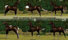 American Saddlebred posepack - by Serenity Meadow Ranch