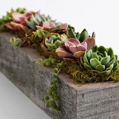 Well, container gardening is one of the best ways to keep your garden looking beautiful, regardless of the space. Try these container gardening tips for the. Succulents In Containers, Cacti And Succulents, Planting Succulents, Garden Plants, Indoor Garden, Succulent Boxes, Garden Trellis, Organic Gardening Tips, Succulent Arrangements
