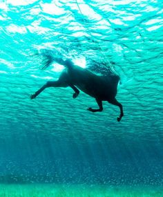 underwater horse photography- so beautiful All The Pretty Horses, Beautiful Horses, Animals Beautiful, Cute Animals, Horse Photos, Horse Pictures, Animal Pictures, Random Pictures, Horse Photography