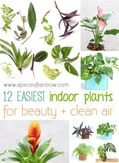12 Easiest to Grow Indoor Plants for Beauty + Clean Air - A Piece Of Rainbow