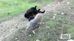 Cat and owl are really good pals. - 9GAG
