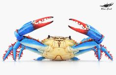 Blue Crab: The making of a blue crab with CG tools by Texel Studio Underwater Creatures, Ocean Creatures, Lobster Art, Crab Art, Beach Art, Marine Life, Beautiful Creatures, Animal Photography, Blue Crabs