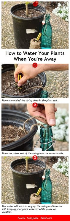 How to Water Your Plants When Youre Away via pindemy.com