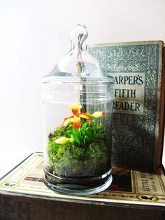 I want to put together an orchid terrarium