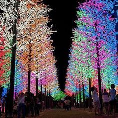 Christmas Lights in Selangor, Malaysia - from 'Most Beautiful Holiday Lights Around the World' at Tripping