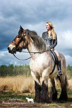 The largest draft horse, Brooklyn Supreme, 19.2 hands high, weighing in at 3,200 lbs.