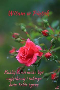 Have A Beautiful Day, Good Morning, Rose, Flowers, Plants, Disney, Polish, Pictures, Buen Dia