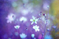 Lovestruck in Purple | Amy Tyler #photography