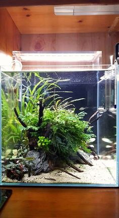 408 best nano aquarium images nano aquarium planted aquarium rh pinterest com