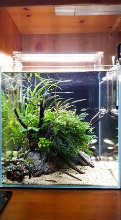 735 best aquarium images aquascaping fish tanks aquariums rh pinterest com