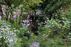 - Flowering perennials flank a path in Pearson's...
