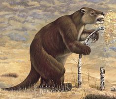 "Megatherium (""Great Beast"") was a genus of elephant-sized ground sloths endemic to Central America and South America that lived from the Pliocene through to the Pleistocene existing for approximately 5.3 million years. weighing up to eight tons, about as much as a bull African Elephant. Although it was primarily a quadruped, its footprints show that it was capable of assuming a bipedal stance. When it stood on its hind legs it was about twenty feet (6 m) tall, twice the height of an…"