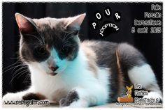 Les Fidèles Moustachus, refuge pour animaux domestiques - Google+
