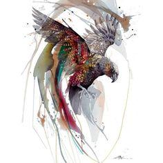 Watercolor Paintings Abstract, Watercolor Trees, Watercolor And Ink, Watercolor Portraits, Watercolor Landscape, Rachel Walker, Bird Artists, Bird Artwork, Rare Animals