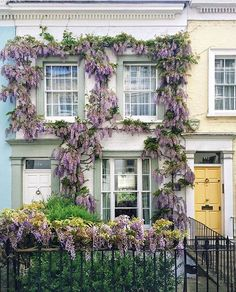 Notting Hill in London is wisteria paradise!
